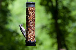 Wild Birds Unlimited Tail-prop Suet Feeder